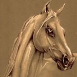 cheval2.jpg